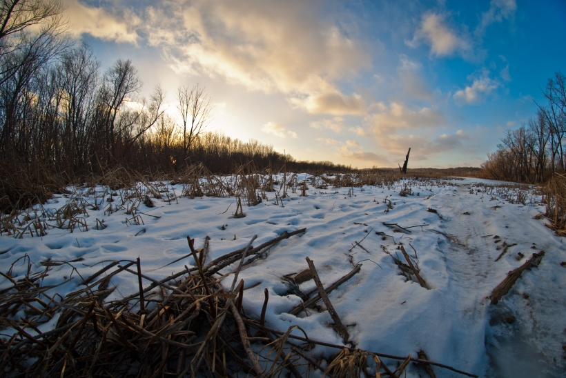 This photograph was taken last January in Shakopee, MN on a chilly winter evening. I pulled over while on a delivery route to watch the sun set over this frozen marsh between Chaska and Shakopee.